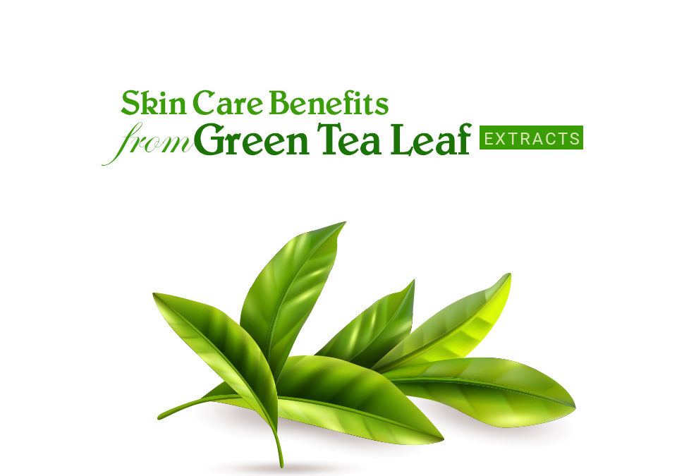 Skincare Benefits from Green Tea (Camellia Sinensis) Leaf Extracts